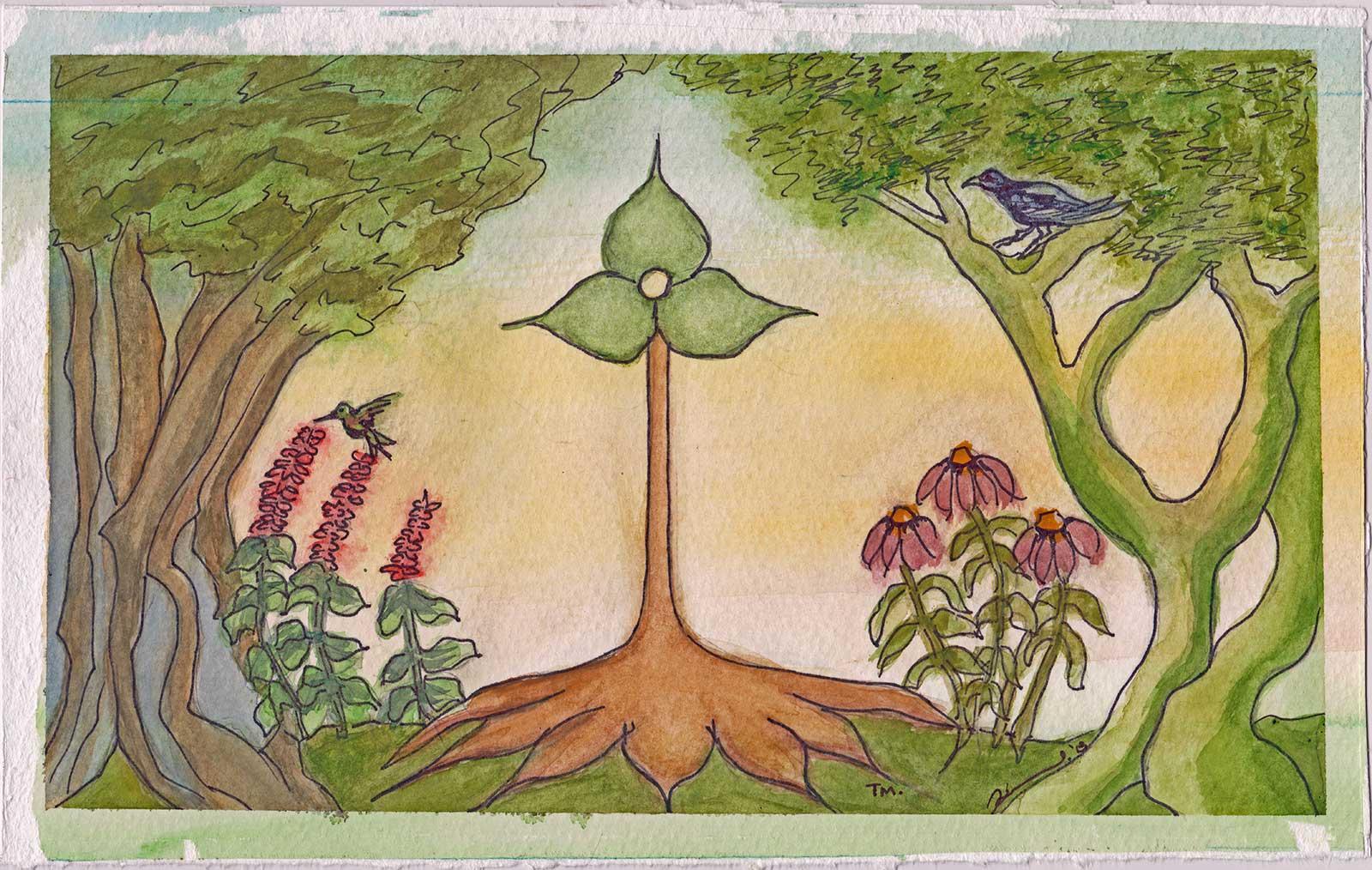 Wildwoods Botanicals